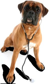 veterinarian_dog.png