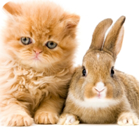 Veterinary care is effective for a wide variety of conditions.