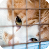 Critics of pet stores argue that there are numerous problems with the way most stores acquire, care for, and sell animals.