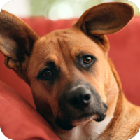 In this section, learn how to help your pet feel at home!