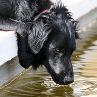 Kidney Disease & Your Dog   Kidney disease can be very serious.  Infections, toxins, drugs, and even some foods can cause renal damage.  Symptoms include vomiting, lethargy, and a poor appetite.  Treatment requires IV fluid therapy. Other medications depend upon the cause.