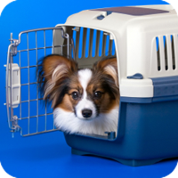 Transport crates, available from most pet shops, must have specific criteria.