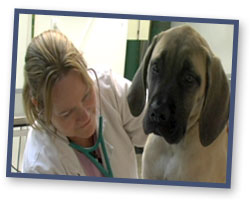 Dr. Kelly Pinkston Help for Animals Clinic One Humane Way PO Box 250 Barboursville, WV 25504 304-736-8555