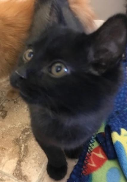 Doc Hudson - Adopted 3/23/18