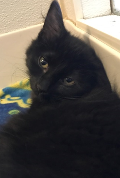 Jackson Storm - Adopted 3/12/18