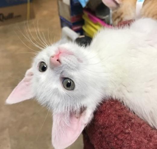 Melisan- Adopted 6/8/18