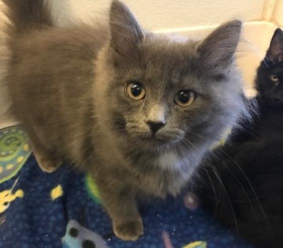 Natalie - Adopted 3/12/18