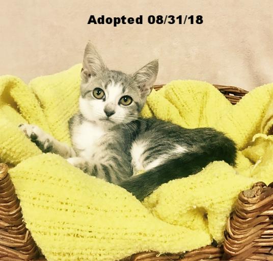 Eloise - Adopted 8/31/18
