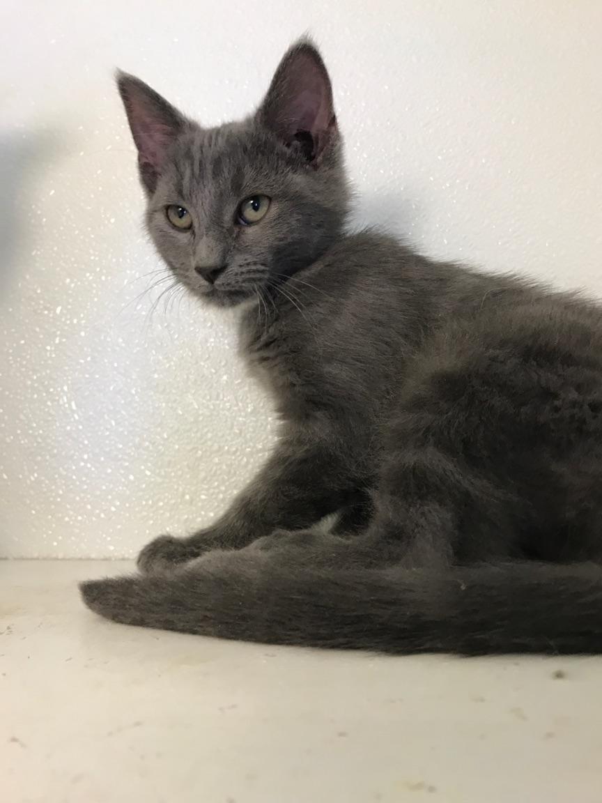 Bridget - Adopted 9/7/18