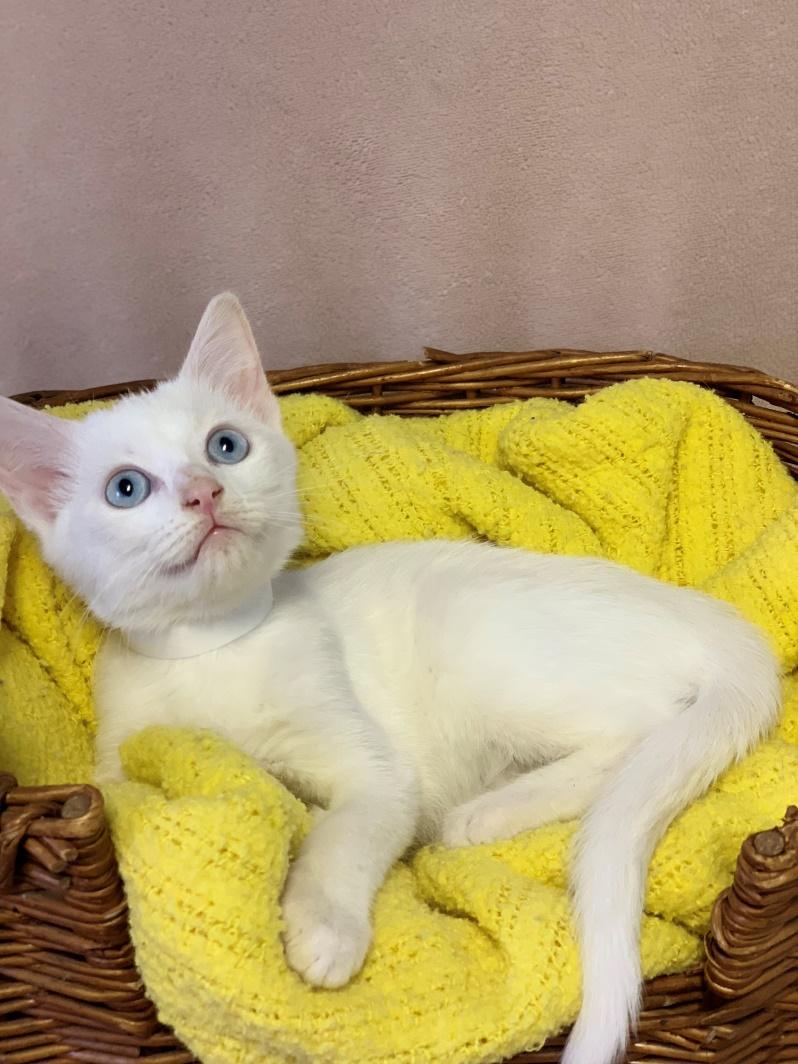 Boo - Adopted 11/5/18