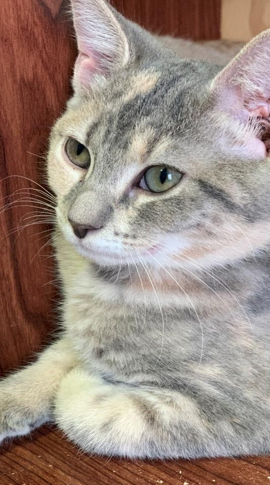 Lyra - Adopted 11/16/18