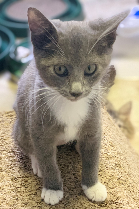Pocus - Adopted 11/20/18