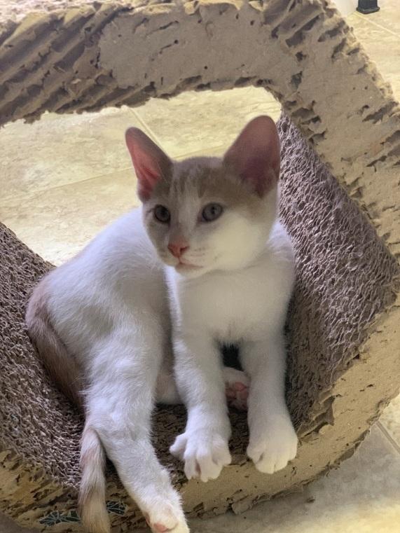 Fang - Adopted 12/12/18