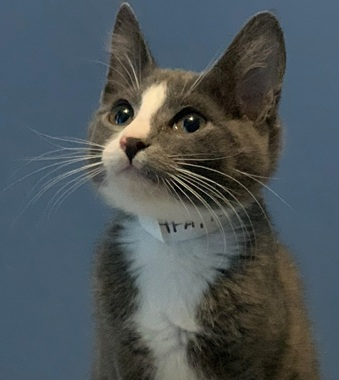 Rudyard - Adopted 1/29/19!
