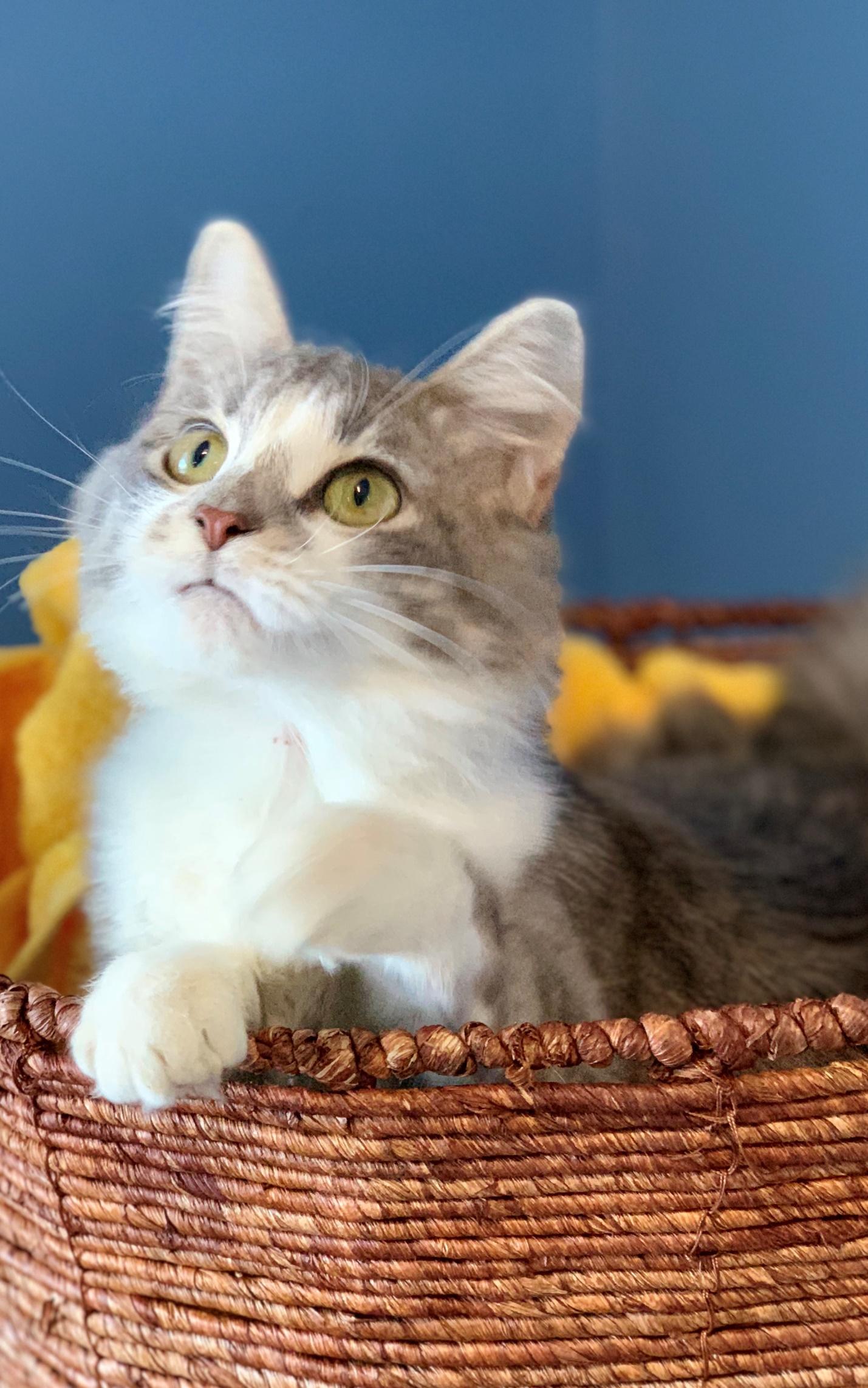 Calypso - Adopted 2/4/19!