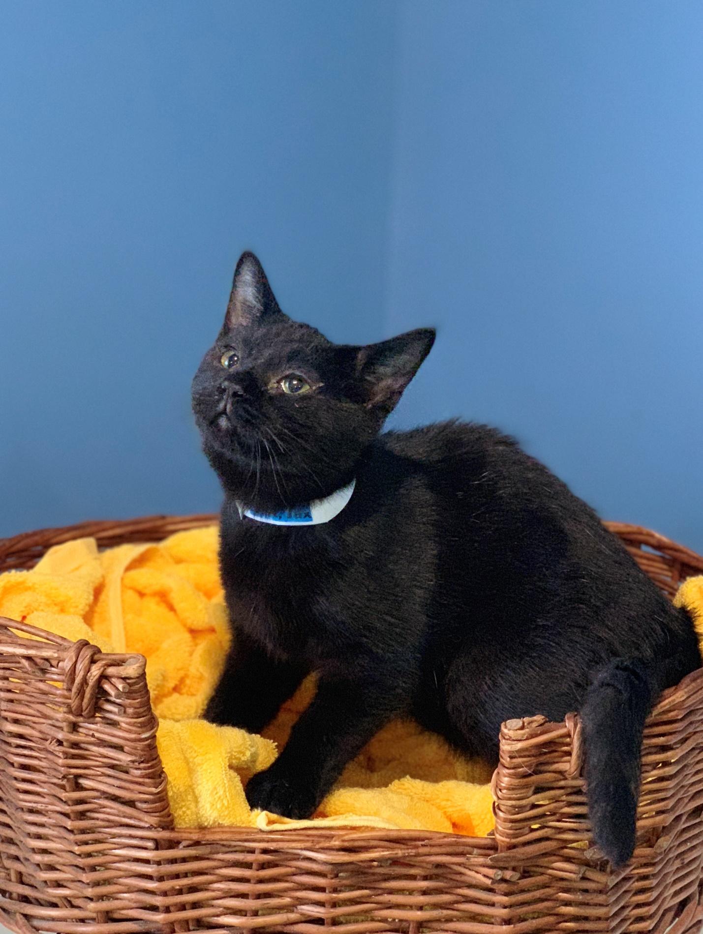 Jax - Adopted 3/1/19!