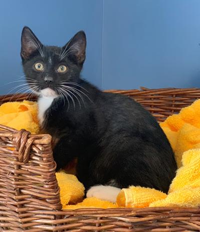 Darwin - Adopted 3/4/19!