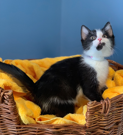 Cruella - Adopted 3/7/19!
