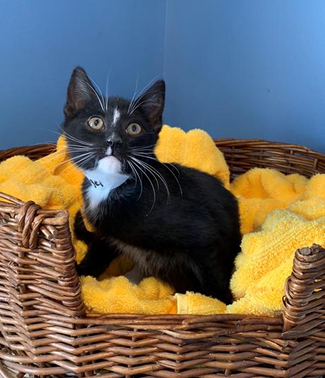 Nigel - Adopted 4/9/19!