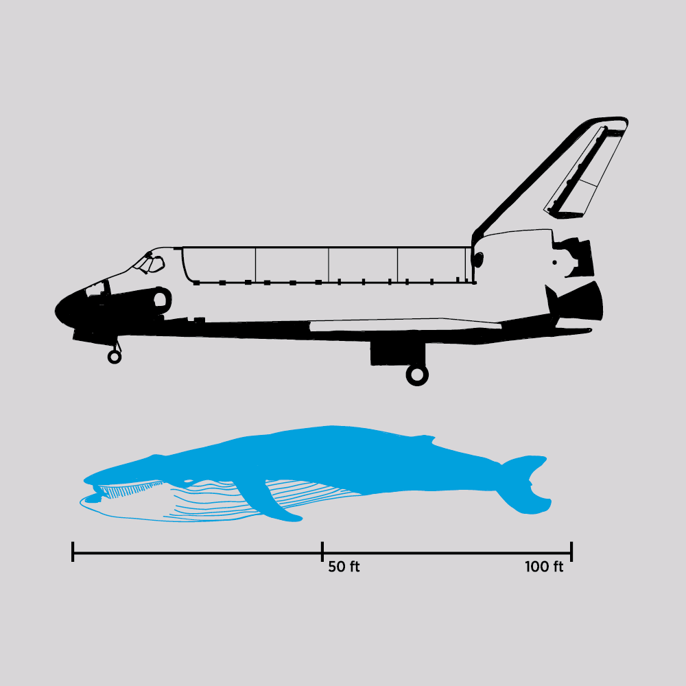 whale and shuttle orbiter