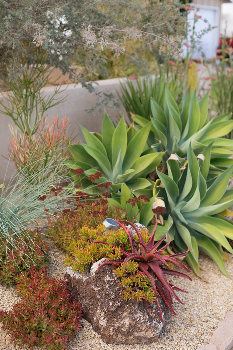 succulent front yard by singing gardens.jpg