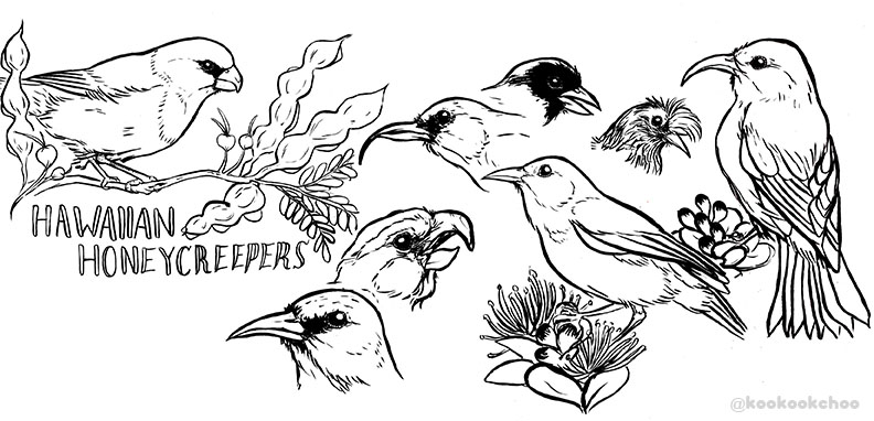 Hawaiian Honeycreepers (Kelsey Choo) -Digital Print copy 2.jpg