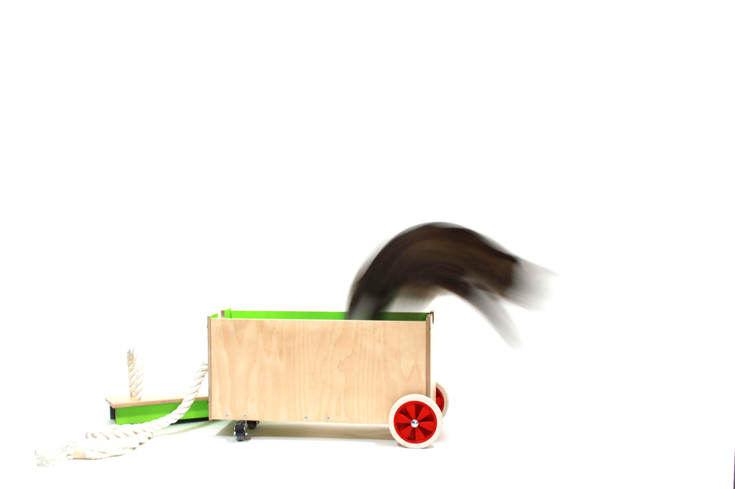 cat-troy.jpg