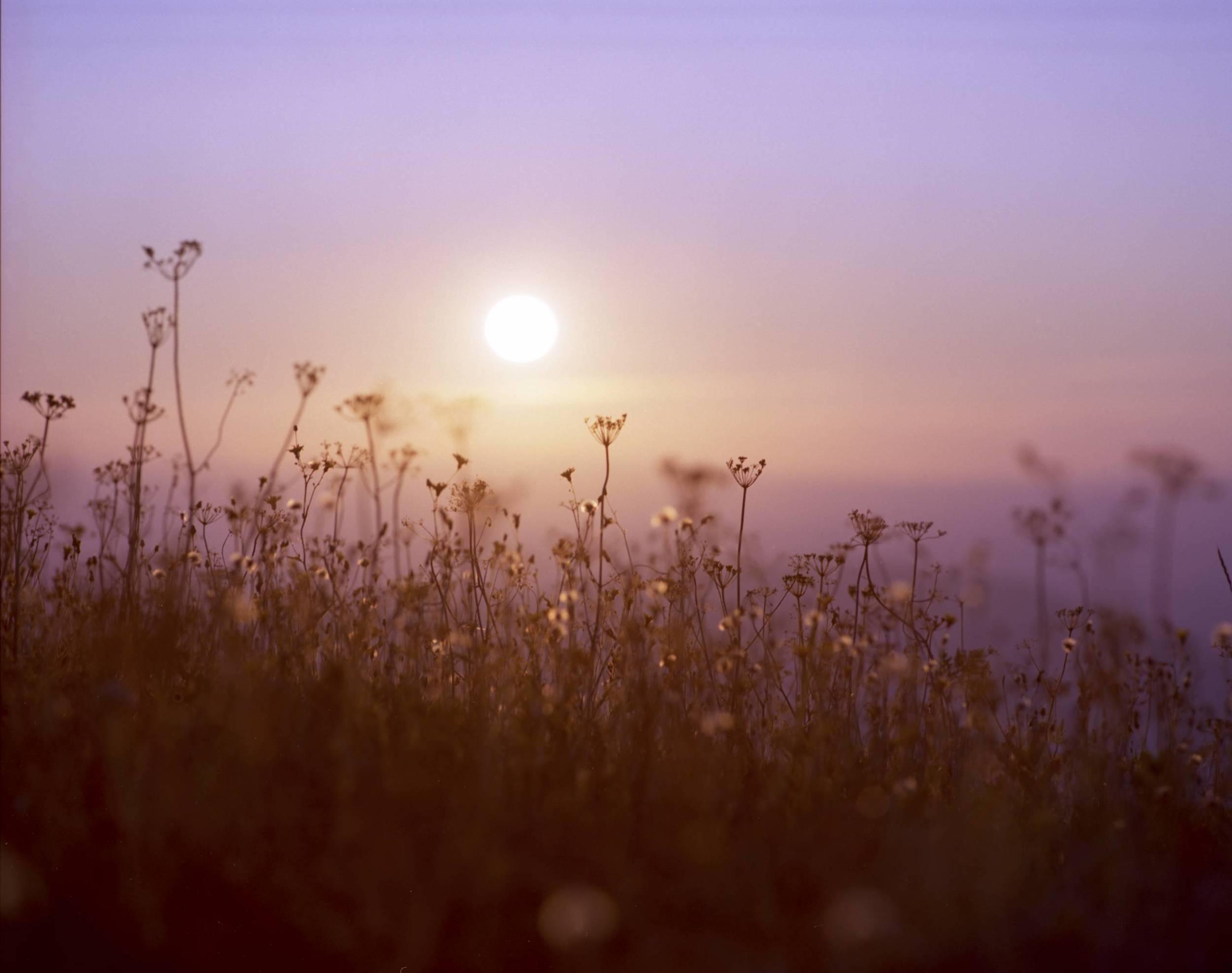 sunsetsilverflowers.jpg