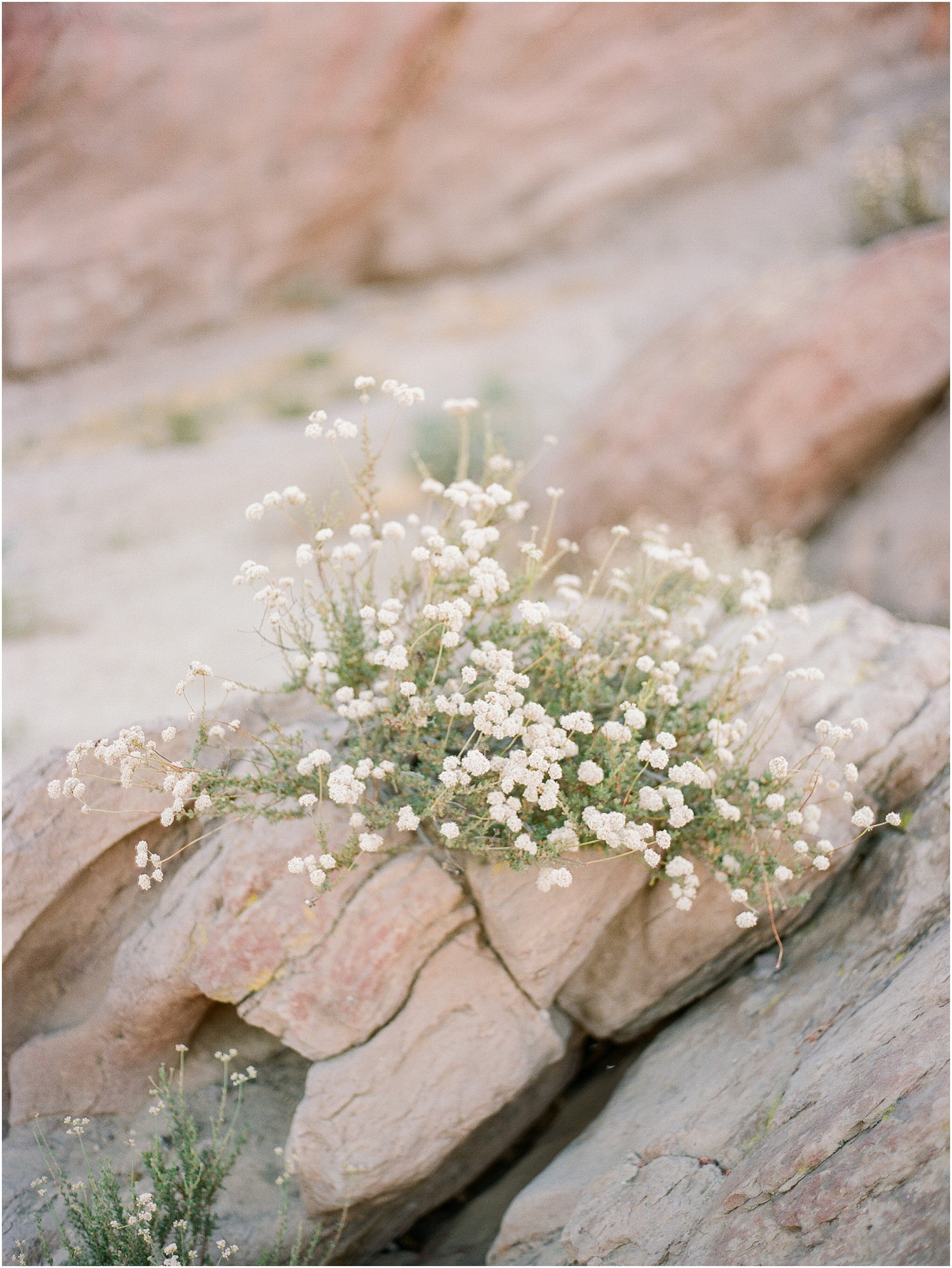 Vasquez-rocks-ca-engagement-session-3.jpg