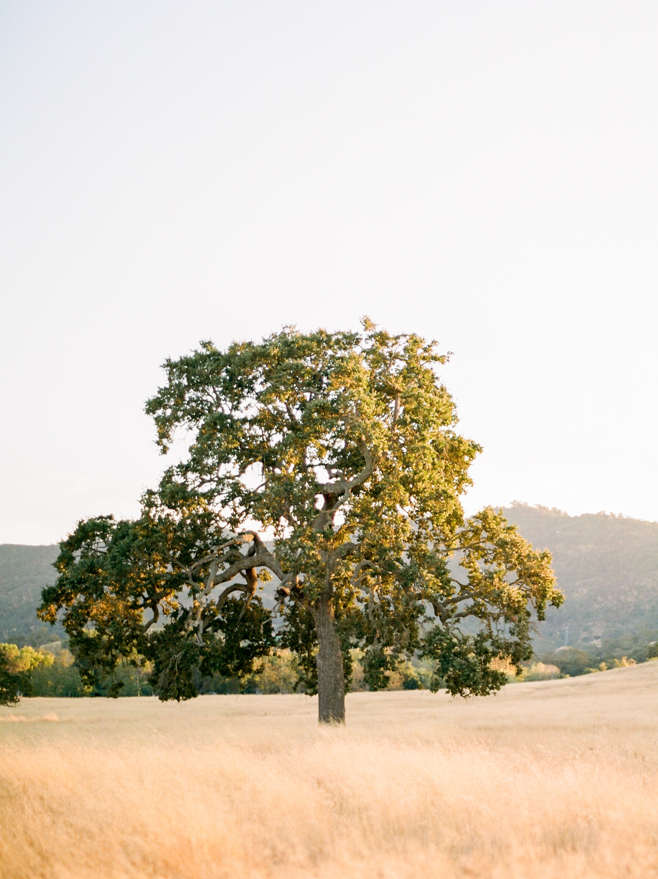 Steve Torres Photography Santa Margarita Ranch Wedding-565.jpg