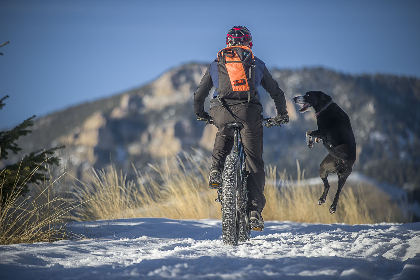 9 out of 10 dogs surveyed prefer fat biking to satisfy their winter recreational needs.