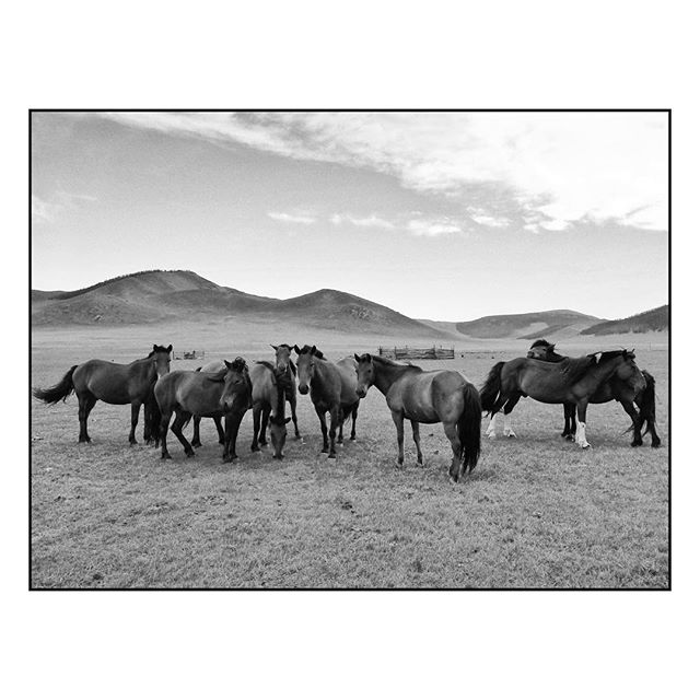 Mongol horses   Somewhere in the Mongolian steppe. . . . #canon #canon5d #phtography #documentary #documentaryphotography #mongolia #horse #horses #steppe #nomads