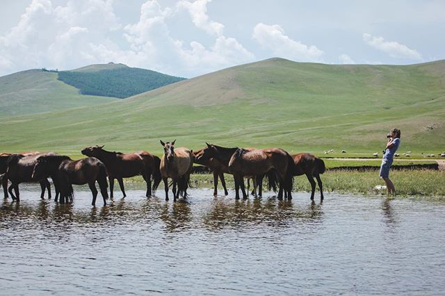Following the mongol horses. Did you know that the nomads in Mongolia have more than 3 million animals? That outnumbers their human population. . . . #mongolia #horse #horses #nomads #steppe #photography #documentaryphotography #storytelling #canon #canon5d