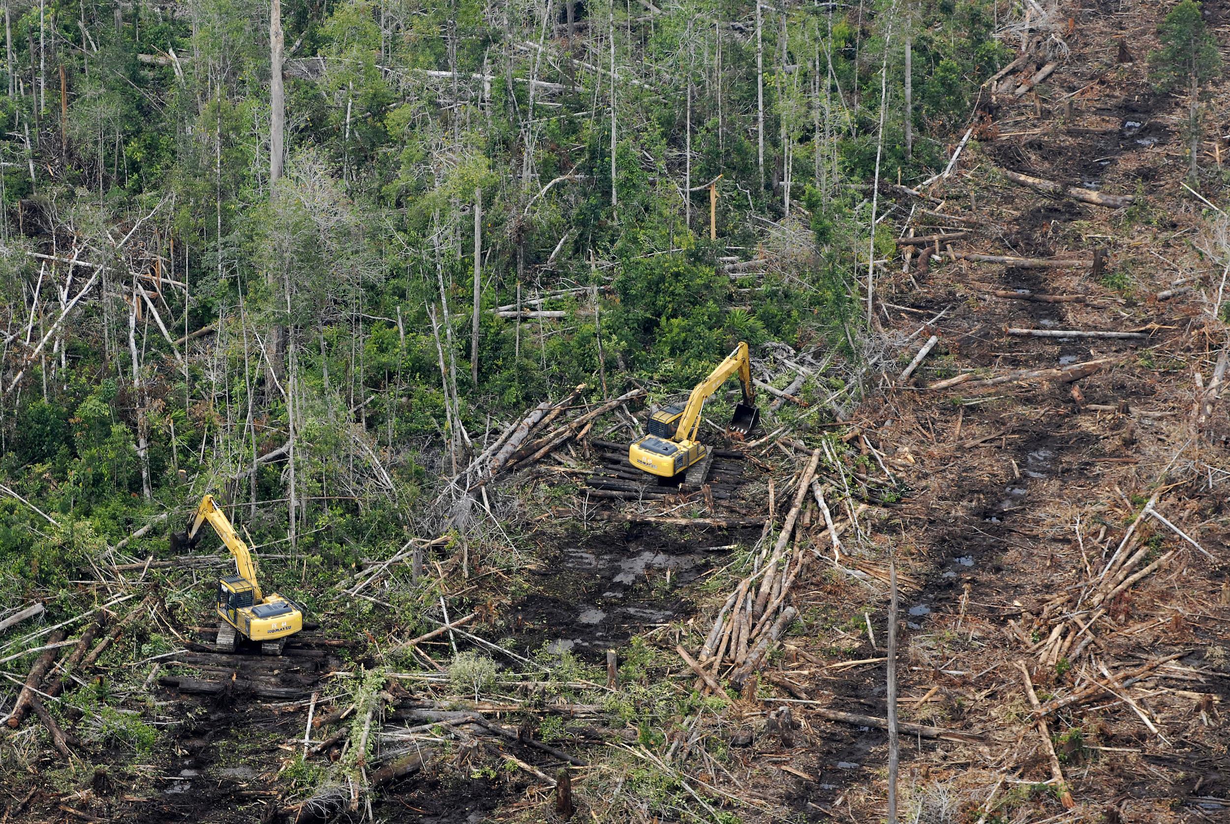 Peat swamps under siege...