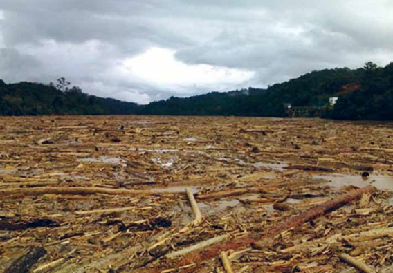 In October 2010, the Rajang River had a 50-kilometer-long logjam (photo by Hornbill Unleashed)