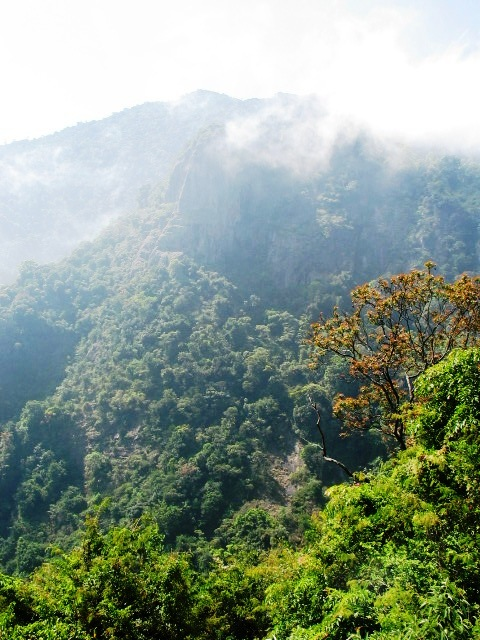 Prime real estate... rainforests of the Western Ghats (photo by William Laurance)