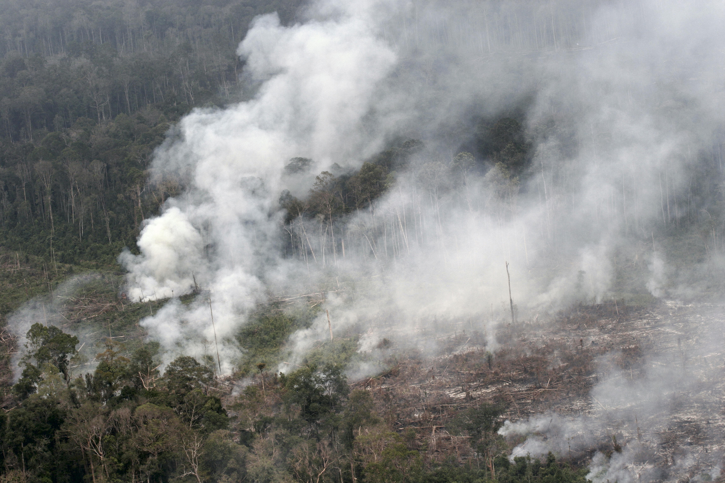 Where there's smoke...  forest burning in Sumatra (photo by William Laurance)