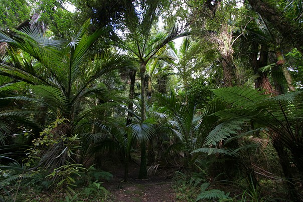 Pristine forest... home to Kiwis and lots more