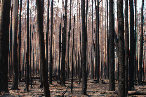 Razed forests...
