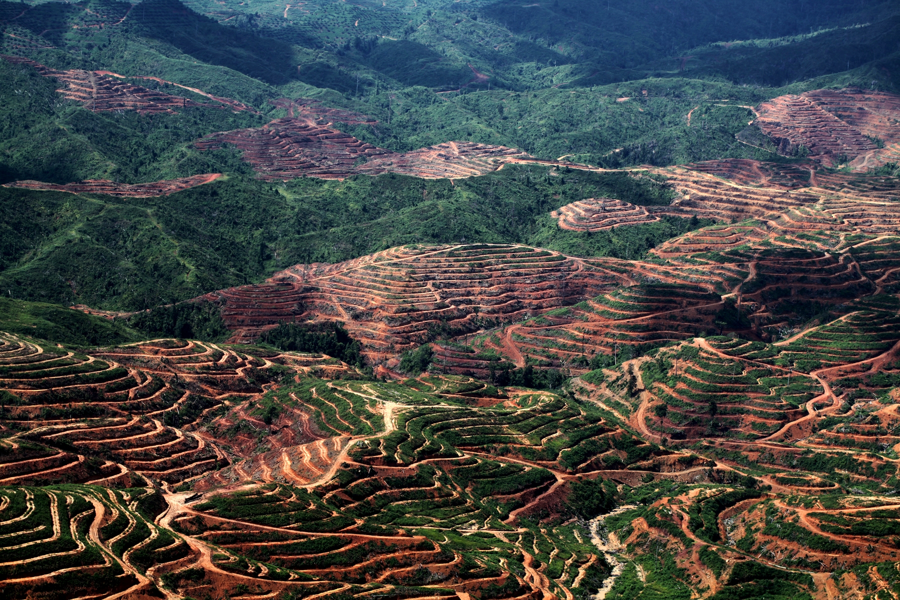 Expanding oil palm in Sabah, Malaysia  (photo by Rhett Butler)