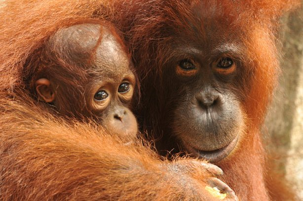 Warm and fuzzy news for rainforests