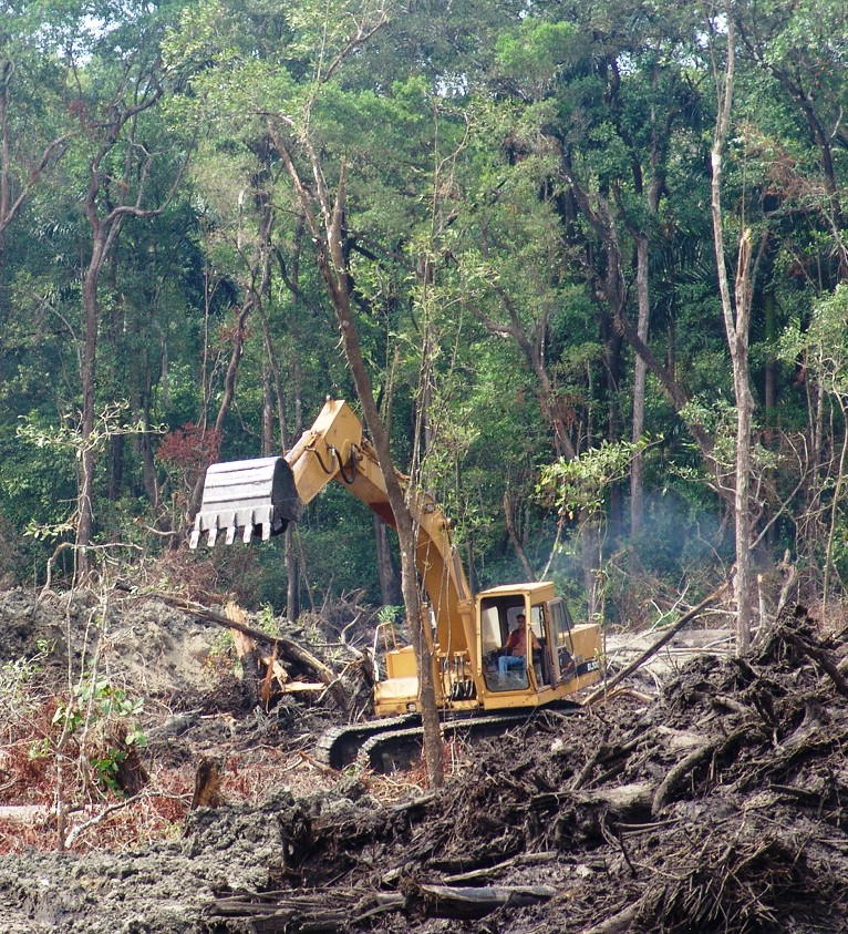 Forests under assault in Panama  (photo by William Laurance)