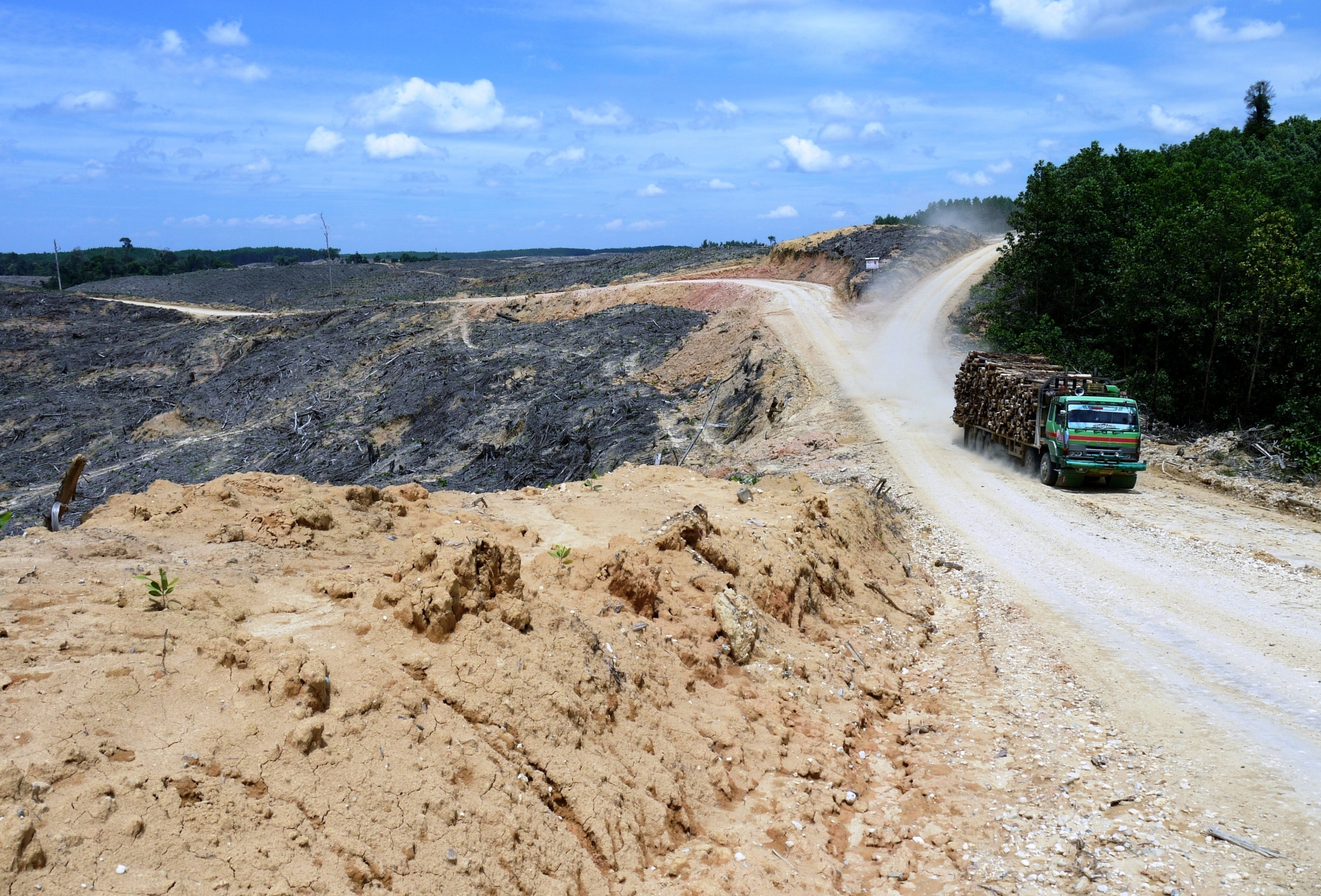 A rainforest cleared for wood pulp in Sumatra  (photo by William Laurance)