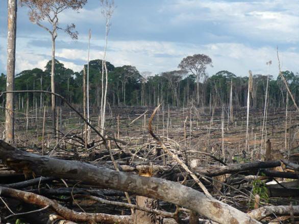 A rainforest dies in Peru