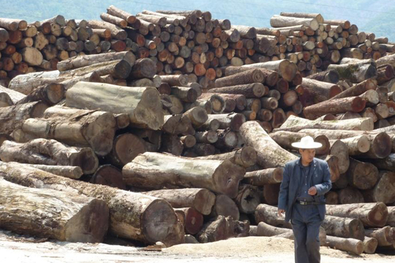 Timber smuggled from Myanmar to China