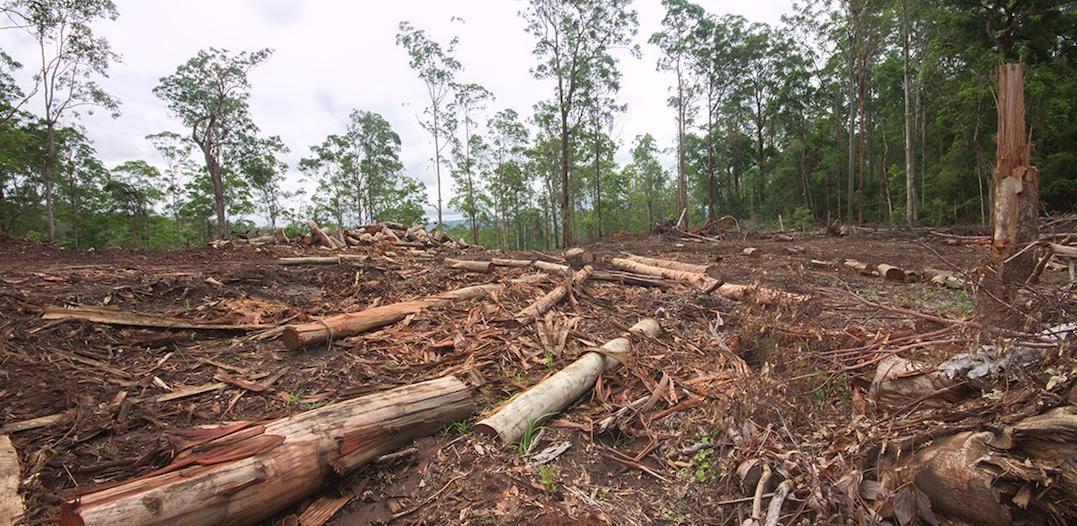 Forests and woodlands are still falling fast in Queensland.