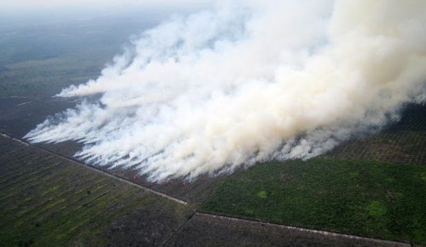 Fires seem to increase each year in Indonesia