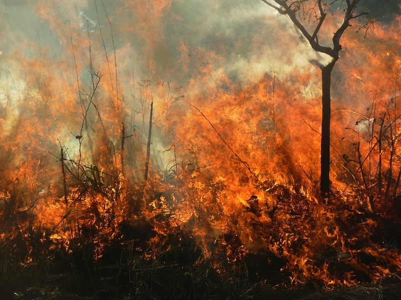 Forests engulfed in flames