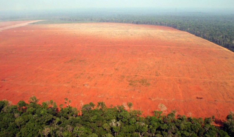 Amazon deforestation for soy farming (photo from Greenpeace)