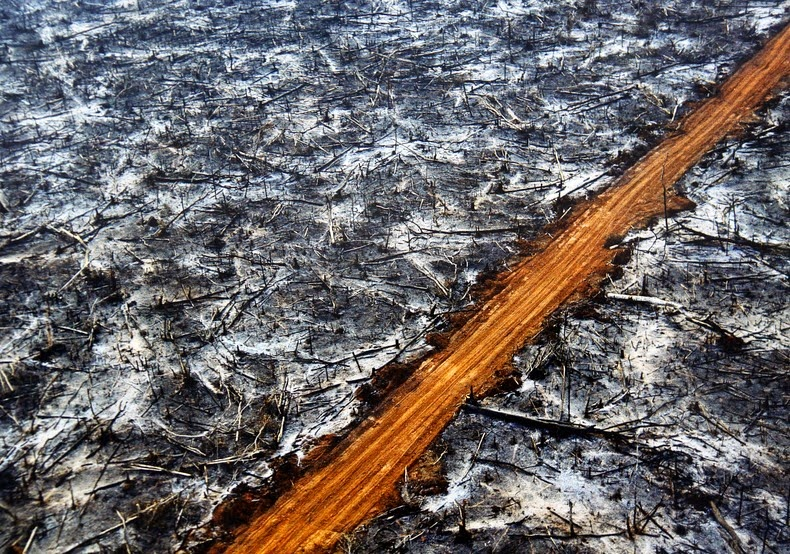 Roads in the Amazon often promote large-scale forest loss.